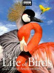 BBC's excellent documentary series: The Life of Birds