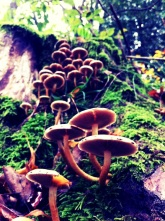 Mushrooms: harmful or helpful to the plants around them?