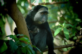 Primate and child